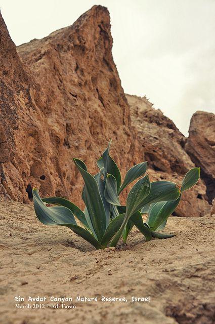 Spring in the desert . Israel