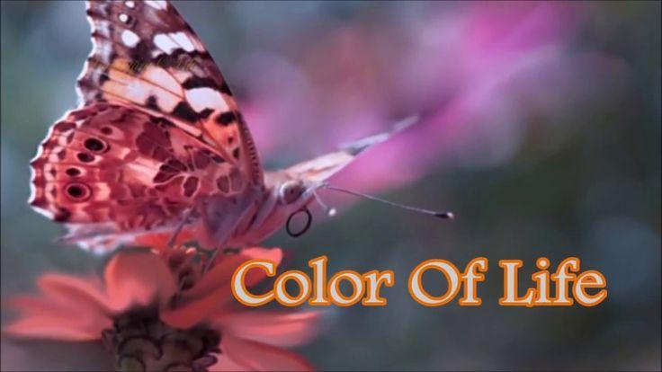 Colors of life   Gianluca Attanasio