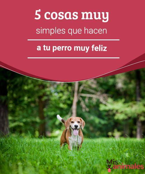 5 cosas muy simples que hacen a tu perro muy feliz  ¿Quieres ver a tu perro con una sonrisa canina?. A continuación te dejamos algunos consejos muy simples sobre las cosas que hacen a tu perro muy feliz. #felicidad #mascota #detalles #consejos