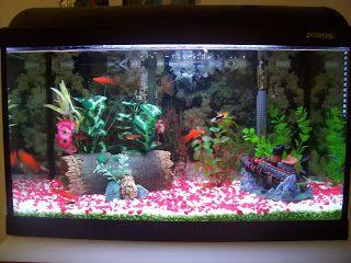 Canal 13: Dicas para fazer um aquário de água doce