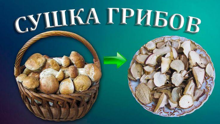 Сушка белых грибов   Сушеные белые грибы