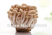 2016 New 100seeds/bag A variety of mixed edible mushrooms, pleurotus mushroom strains geesteranus seed plants(China (Mainland))