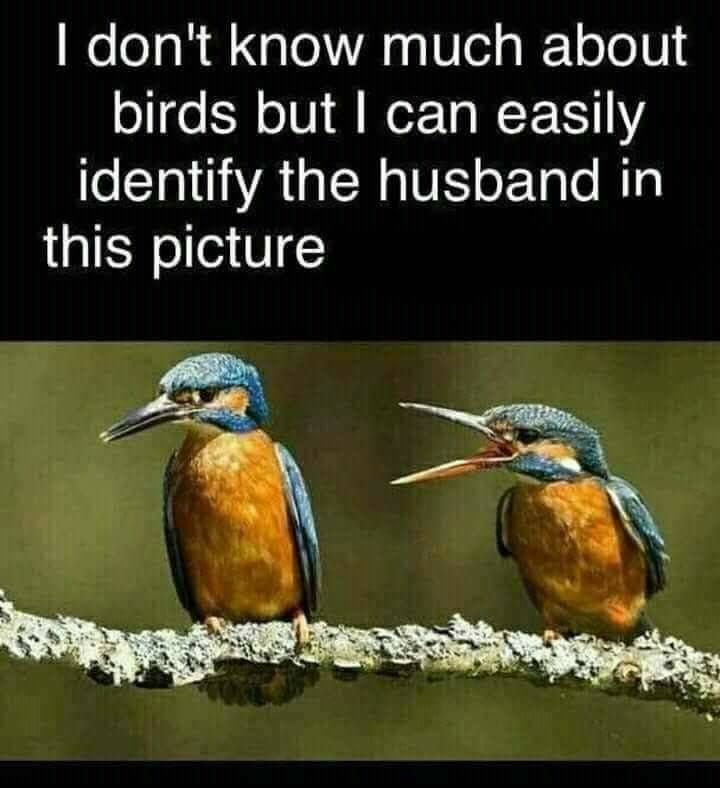A Bird's Eye View Of Marriage.