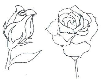 252 best Drawing Roses images on Pinterest