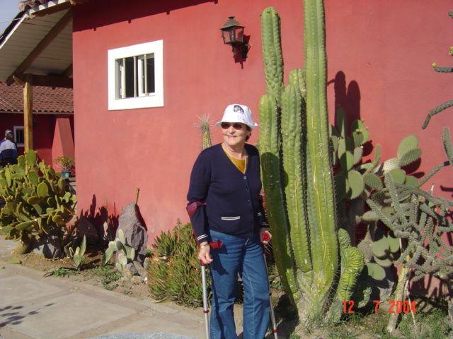 """Planta de Pisco Capel, Vicuña 2004. """"Junto a estos cactus, que me gustan tanto y los colecciono""""."""