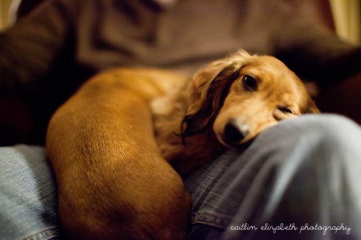 Cute Dauchshunds | Eastern Shore Pet Photographer | Lifestyle Pet Photographer