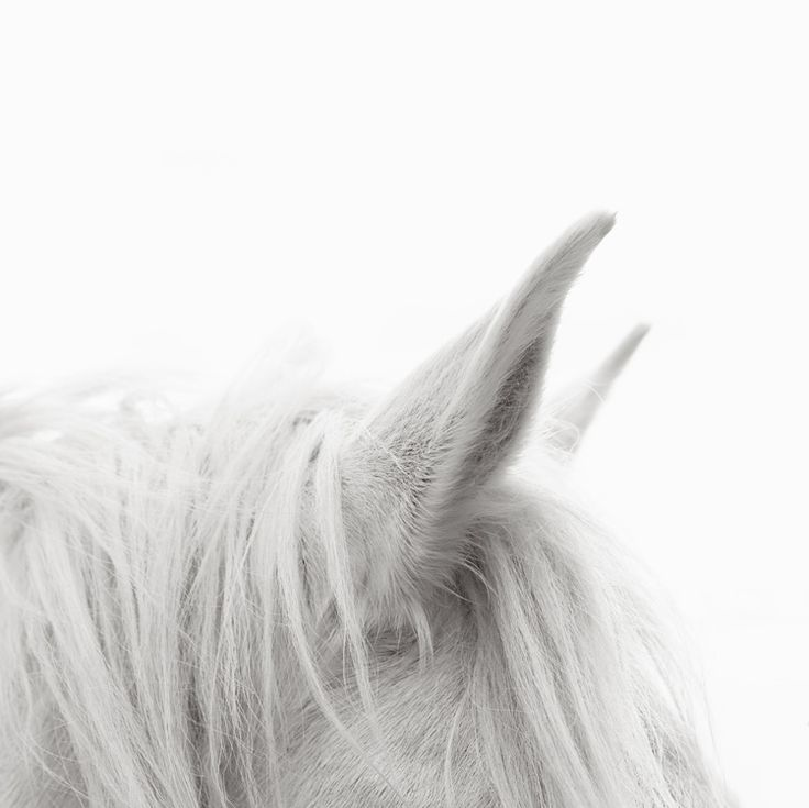 Mejores 39 imágenes de Animal-飞禽走兽 en Pinterest | Pájaros ...