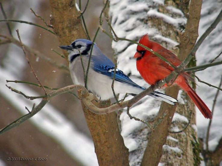 295 Best Images About Birds In The Wild On Pinterest