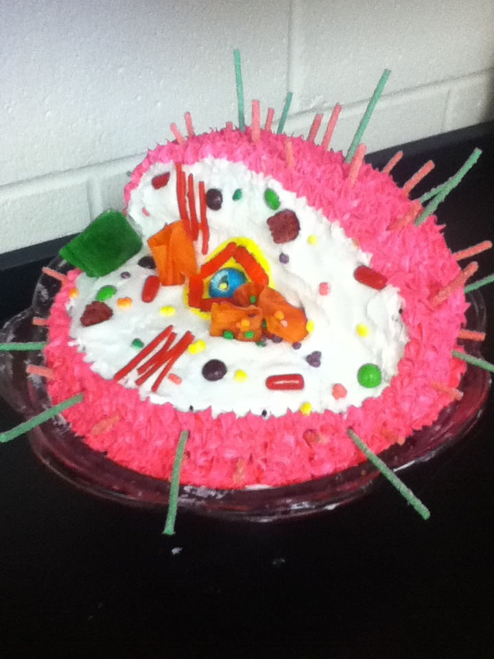 Edible Animal Cell Model Project Ideas