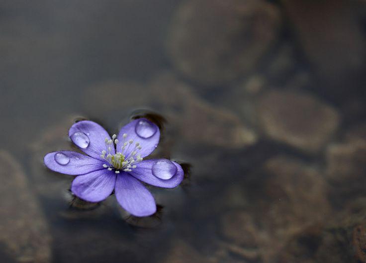 sweet melancholy by Serena Zugliani - Photo 140954833 - 500px