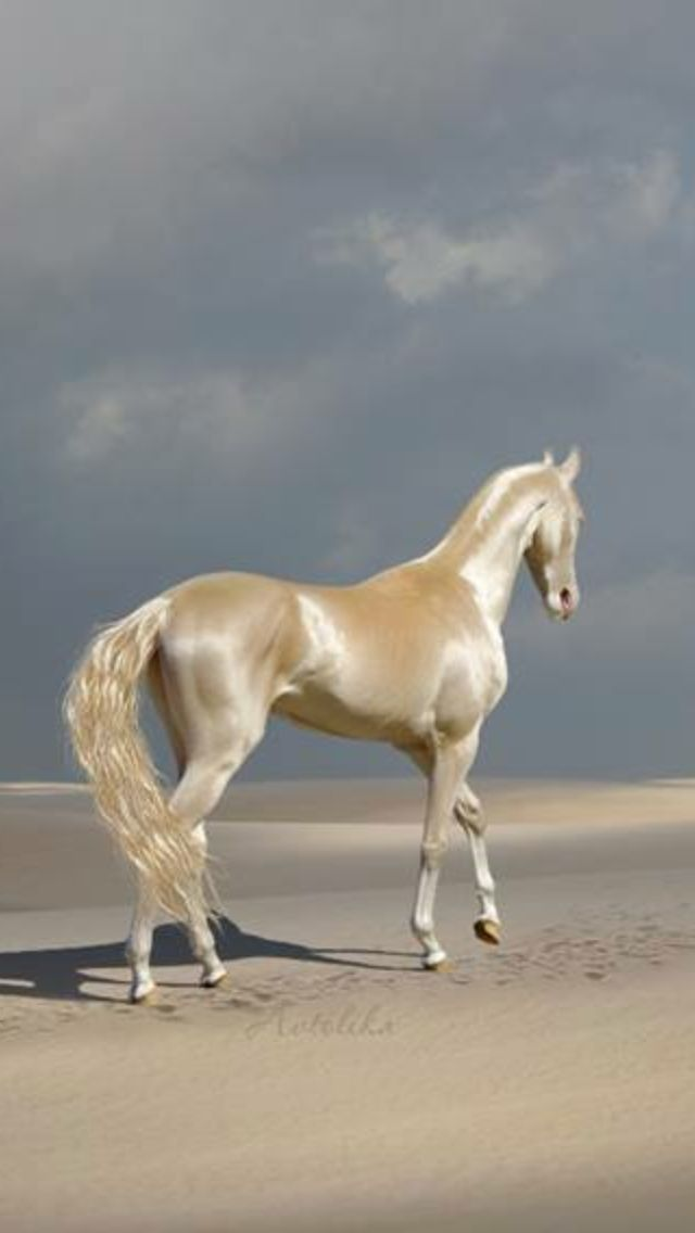 Akhal-Teke, horse of great beauty, from Turkmenistan, Central Asian state on the Caspian Sea, capital: Ashgabat.