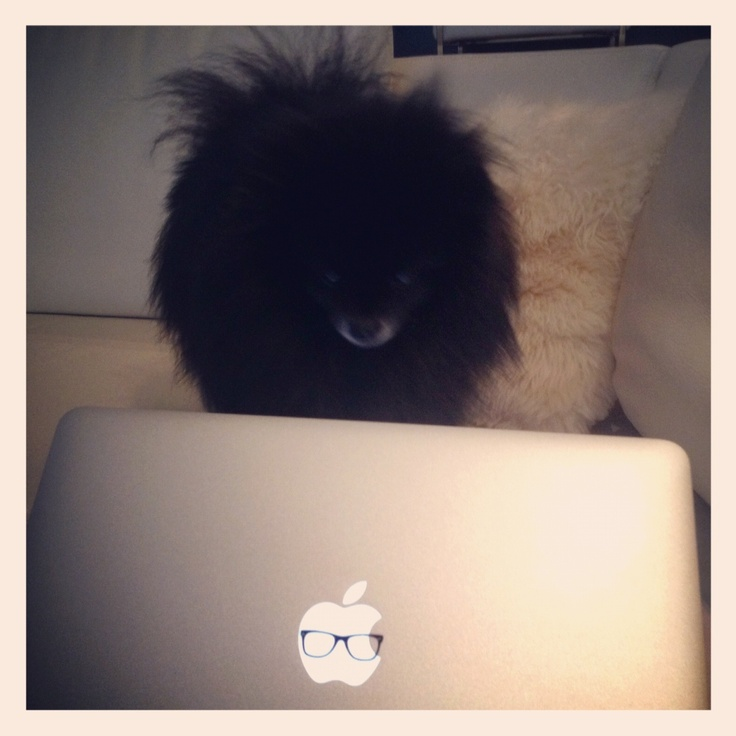 My dog (RICH) is learning how to use Mac OS.     If you are interested in the sticker on this MacBook, you can get it here: www.macstickrs.com #macbook #apple #rayban #instagram