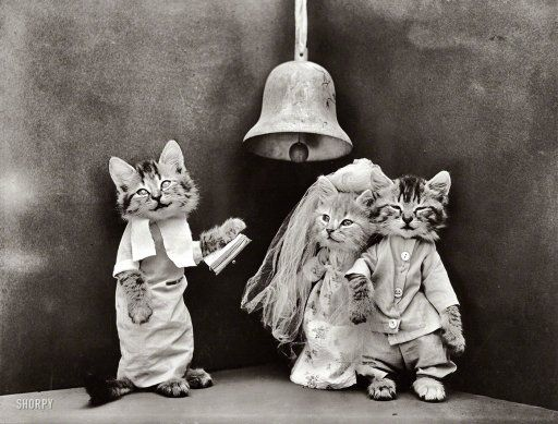 """Cat Wedding: 1914 // 1914. """"Kittens in costume as bride and groom, being married by third kitten in ecclesiastical garb."""" Holy catrimony! Photo by Harry W. Frees."""