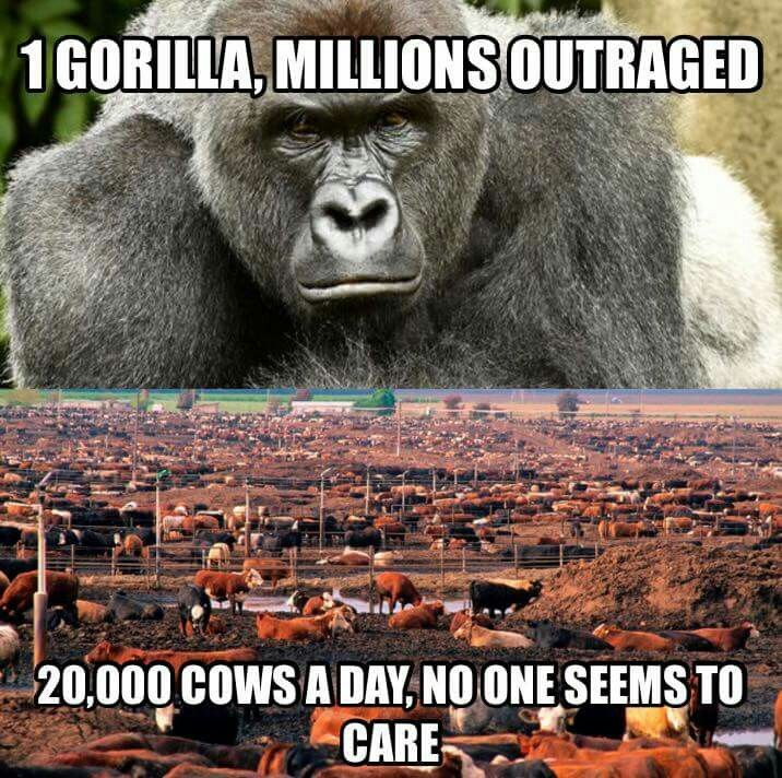 The gorilla thing in the news currently is sad yes, but millions of other animals are killed daily for food and leather and shit