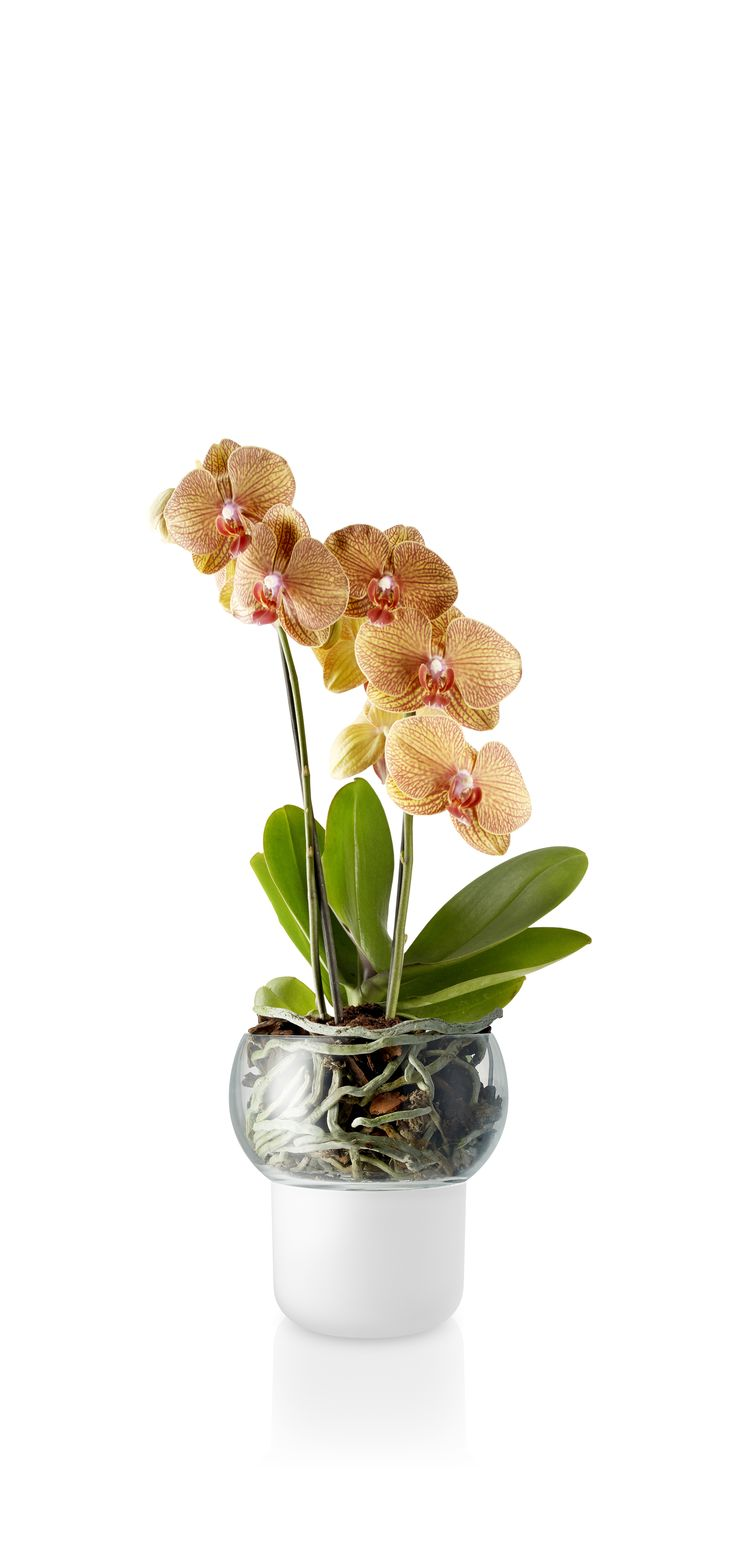 Selfwatering orchid pot 13 cm by Eva Solo