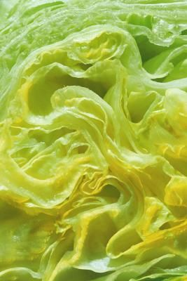 Does Iceberg Lettuce Have Any Nutritional Value? | LIVESTRONG.COM