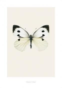 Hagedorn & Hagens ultraskarpe bilder av vakre sommerfugler og insekter er et blikkfang på veggen. Trykt på kvalitetspapir.To størrelser:Medium:42 x 59 cmStor: 70 x 100 cmMå bestilles i egen ordre da rullen ikke kan sendes sammen med andre varer p.g.a formatet på pakken.Men dukan gjerne bestille flere rullerpå en bestilling.