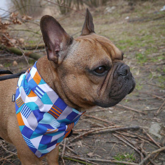 Bandana dla psa z imieniem, niebieska chusteczka zapinana na rzep Labirynt – Cena | sklep internetowy Psiakrew