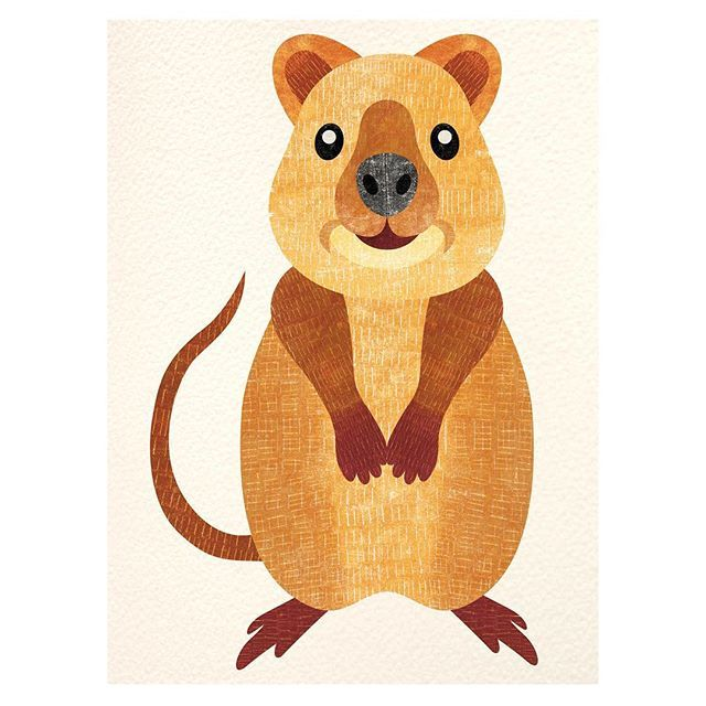 q is for quokka  day 17 of my illustration challenge a-z of animals #quokka #animal #illustration #lizziesanimalalphabet Available here: http://www.redbubble.com/people/lizziescott/shop