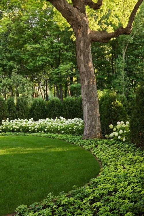 Use a garden hose to try out curved edges for your planting beds. Pictured: Groundcover is pachysandra / white hydrengea / a tall screen of arborvitae in rear.