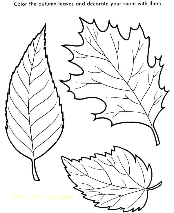 Pin By Tamara On Tamara Fall Leaves Coloring Pages Leaf