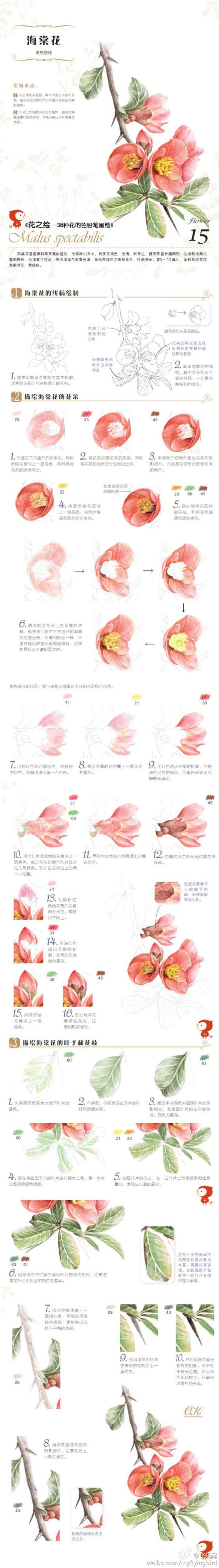 """【绘画教程】#每日涂鸦#""""花之绘""""的海棠花来啦!!手绘过程很详细噢~(点大图更清晰!)"""