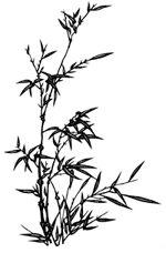 Japanese Bamboo Tattoo Sample