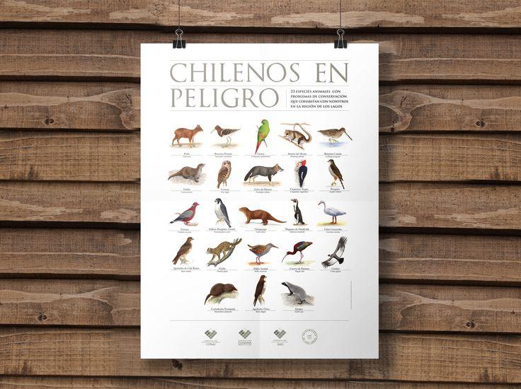 """AFICHE """"CHILENOS EN PELIGRO"""" Afiche encargado por CONAMA para alertar sobre las 23 especies en peligro de extinción en las regiones de Los Ríos y de Los Lagos. Ilustraciones de Marcos Navarro"""