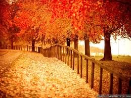 fall wallpapers - Google Search