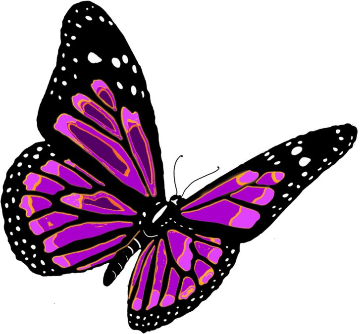 butterfly_PNG1054.png (1053×967)