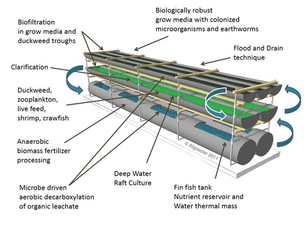 17 best images about aquaponics hydroponics on pinterest for Aquaponics pond design