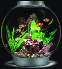 biOrbs : biOrb Fish Tanks