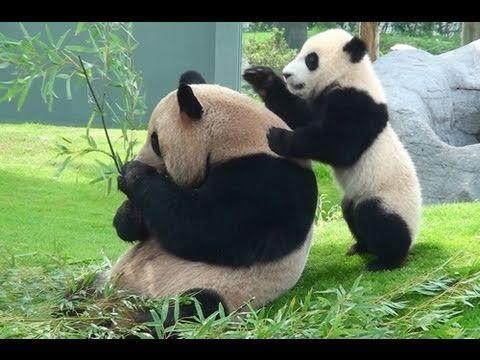 Хороший, успокаивающий массаж перед сном ещё никому не помешал))) так что, массажируйтесь на здоровье, дорогие...и ПРИЯТНЫХ ВАМ СНОВИДЕНИЙ!!!   😊😴