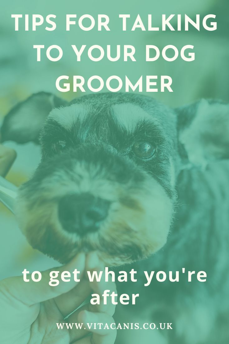 Tips How To Talk To Your Groomer And Get What You Re After In 2020