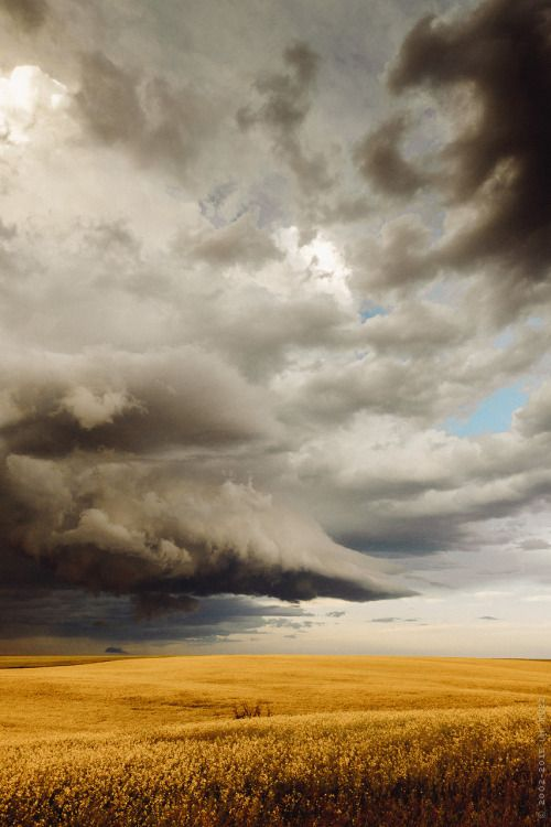 thisherelight:prairie storm over canola fields / alberta / i.m. ruzz