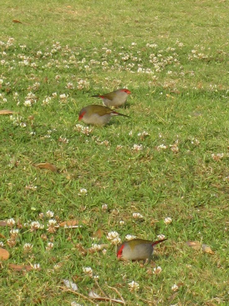 Birdies II