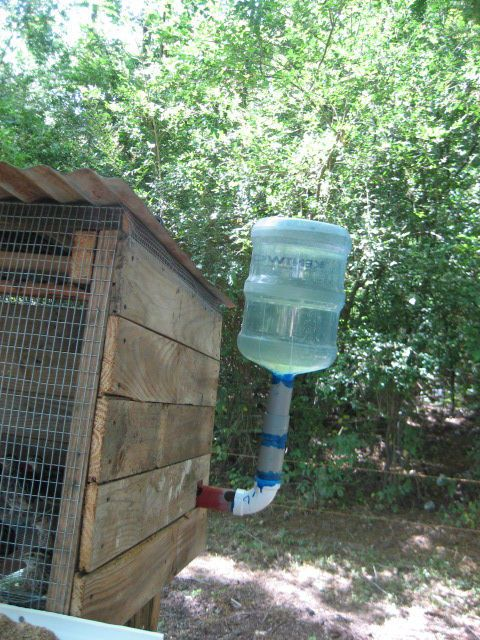 Backyard Quail Production :  water level in the pipe  Quail  Pinterest  Quails, Show Me and Pens