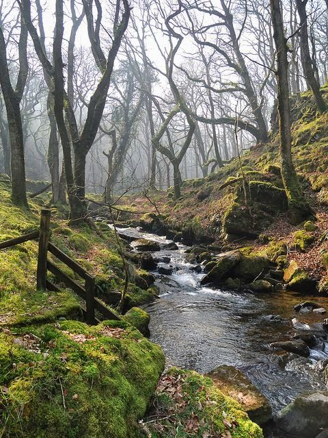 Moor Brook, Dartmoor by DartmoorGiant on Flickr........