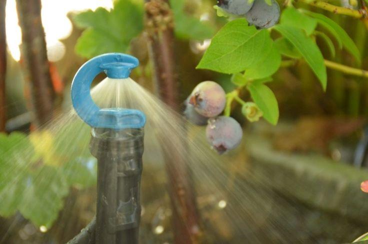 Was möchtest Du 2017 automatisch Bewässern? Jetzt an unserer Umfrage teilnehmen! http://meine-bewaesserung.de/info/hausgarten-bewaesserung/umfrage_bewaesserung/ #Umfrage #Bewässerung #kostenlos