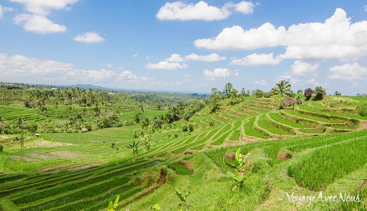rizieres-bali-jatilawih