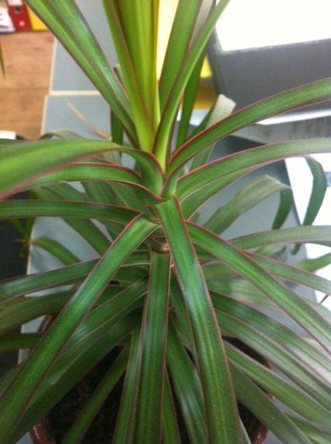 Bamboo Garden Ideas Decor