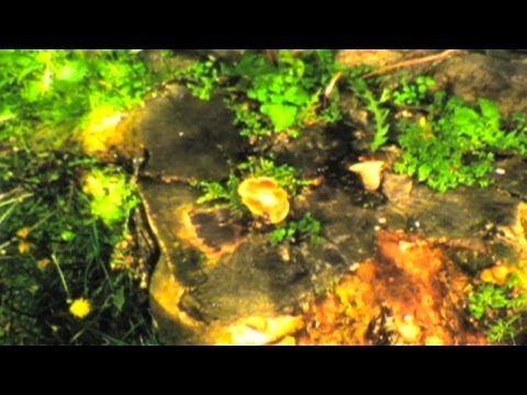 Salvia Plath - Bardo States (Official Video)