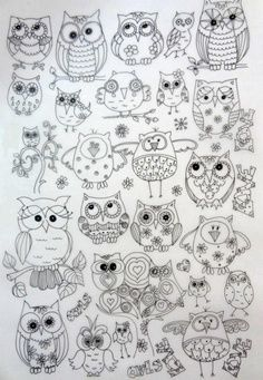Preschool Owl Theme Classroom   Preschool OWLS