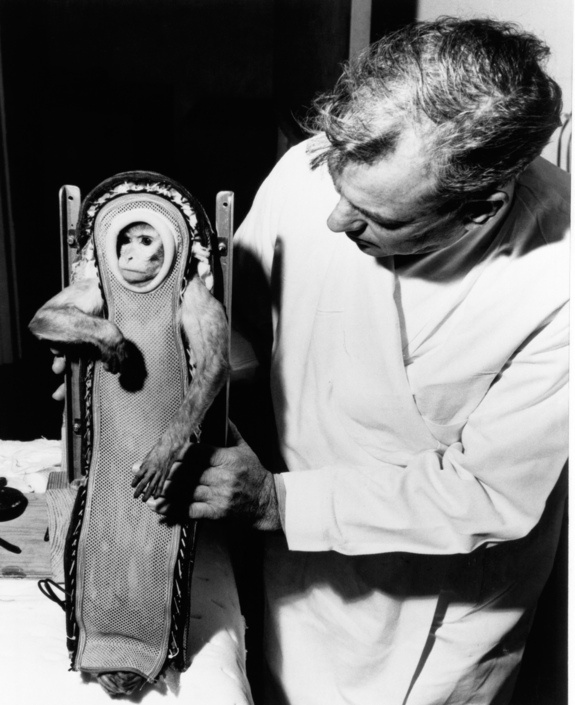 A rhesus monkey named Sam is shown after his flight of Dec. 4, 1959, which tested the launch-escape system of NASA's Mercury spacecraft.