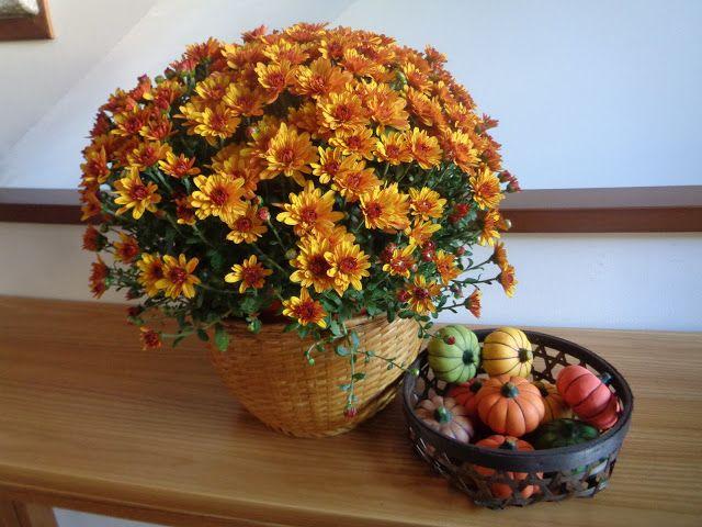 Crisantemi dentro casa...perchè no? https://lefotodiluisella.blogspot.it/2017/09/colori-autunno-dentro-casa.html
