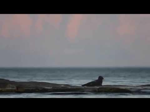 Amazing animals - Ringed Seals on Lake Ladoga - YouTube