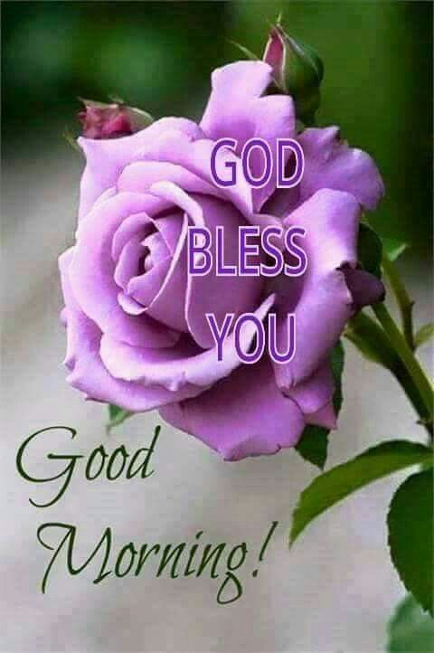 Good Morning Quotes With Flowers : Best images about good morning greetings on pinterest