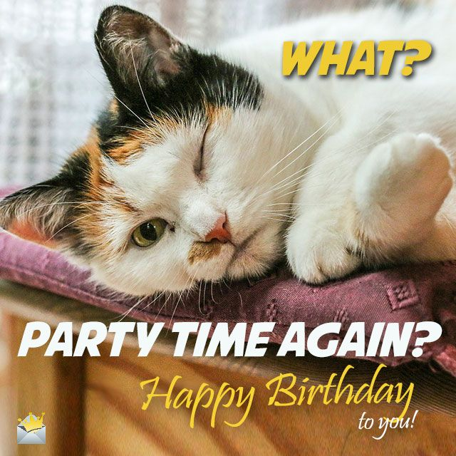 15 Must See Funny Birthday Wishes Pins: Two Words From Cute Animals: Happy Birthday!
