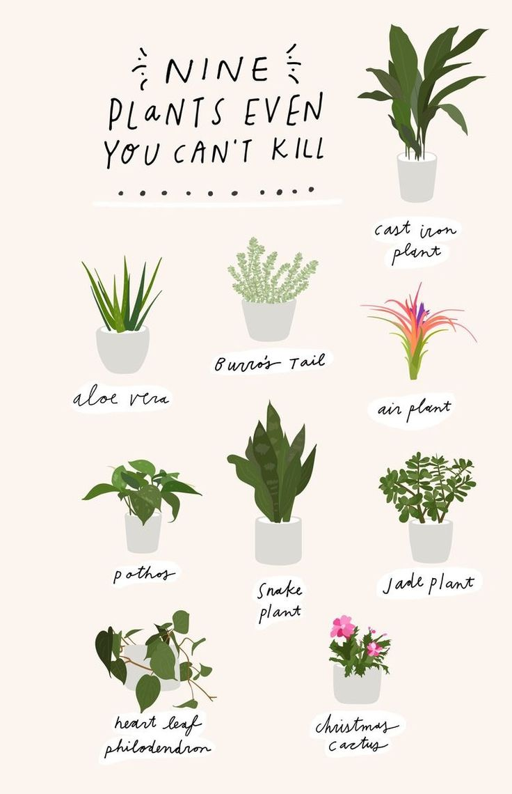 pin by bailey stevenson on crazy plant lady in 2019