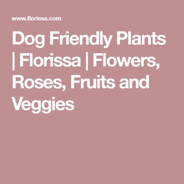 Dog Friendly Plants | Florissa | Flowers, Roses, Fruits and Veggies